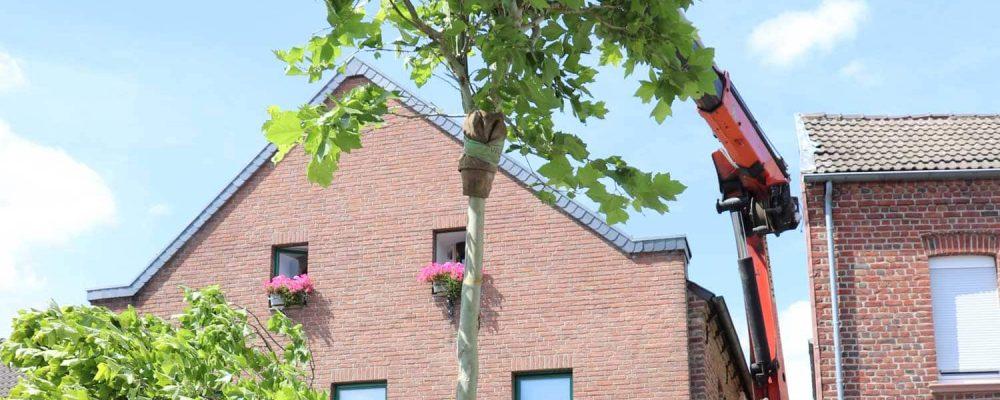 Bäume in Wanlo